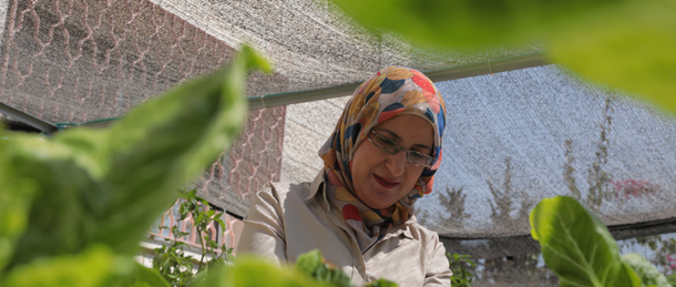 Jamelah Hasasnah, working on the hydroponics and aquaponics system powered by solar energy in Al Basma Center Arab Women's Union, Beit Sahour. Credit: Hussein Zohor/PENGON, 2018.