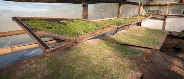 seeds drying agroecology Uruguay