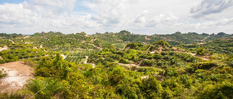plantations Malaysia