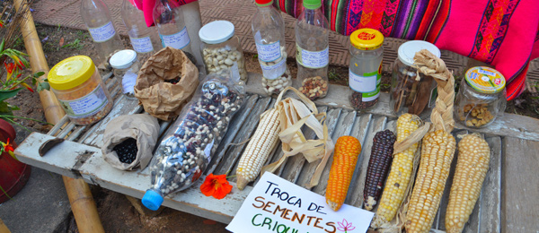 Native seeds for exchange displayed on a market table